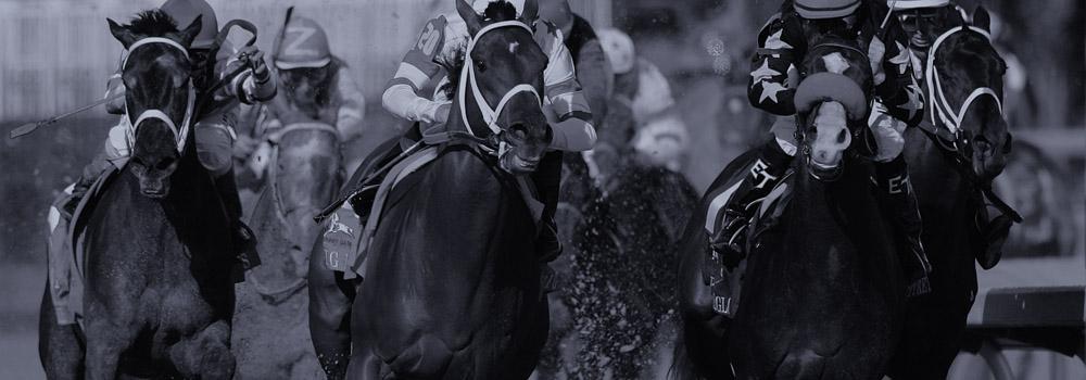 3hello.horseracing